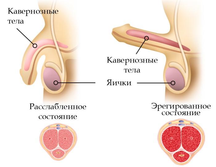 Применение секс кольца
